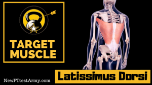 Lat Dorsi Army Leg Tuck ACFT Muscle