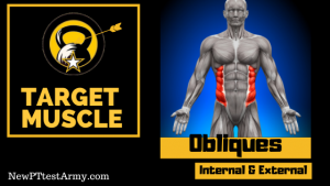 obliques muscles for leg tuck event