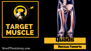 rectus femoris quad muscle for Army Leg Tuck ACFT