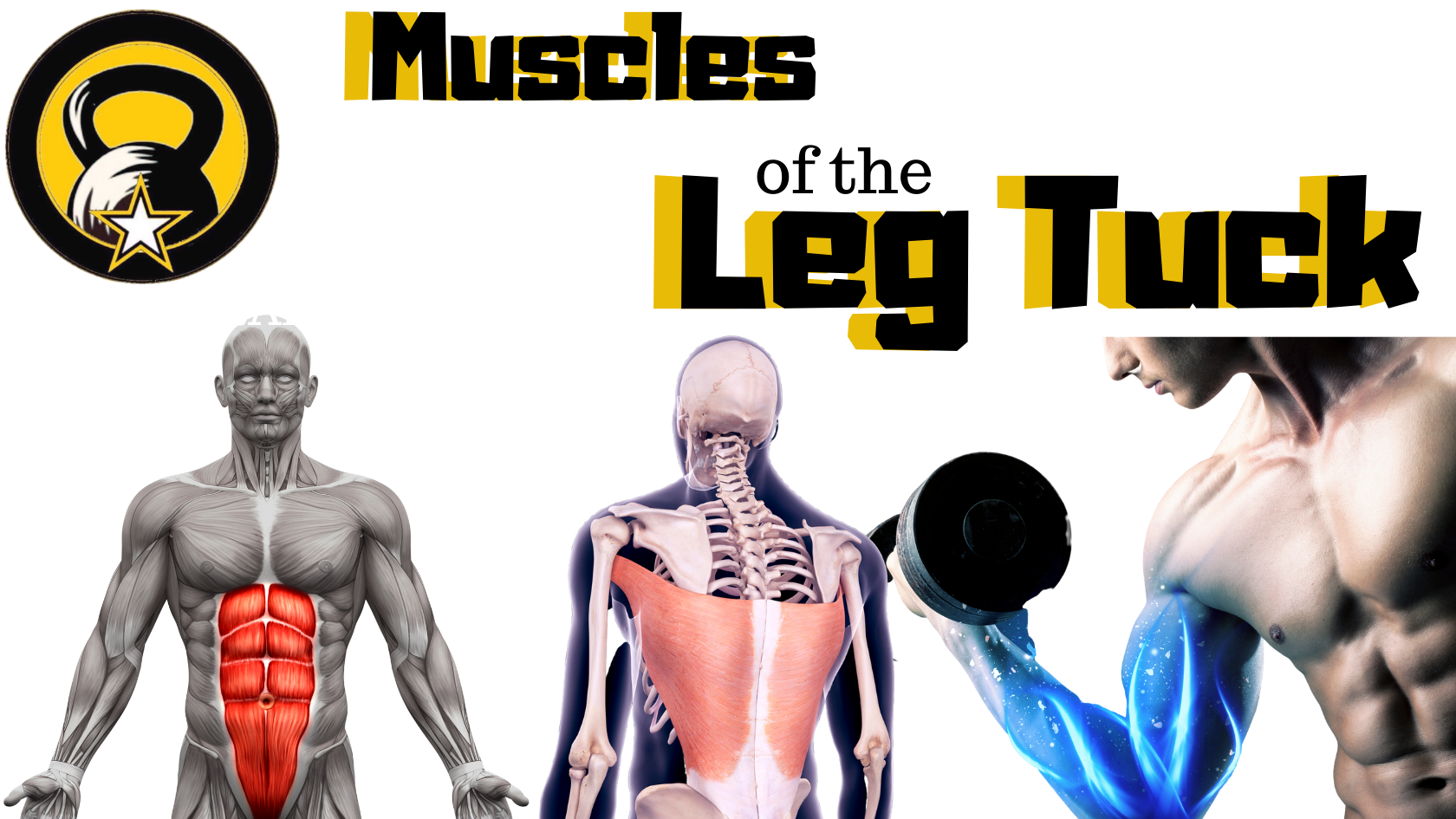Muscles of the Leg Tuck Pic
