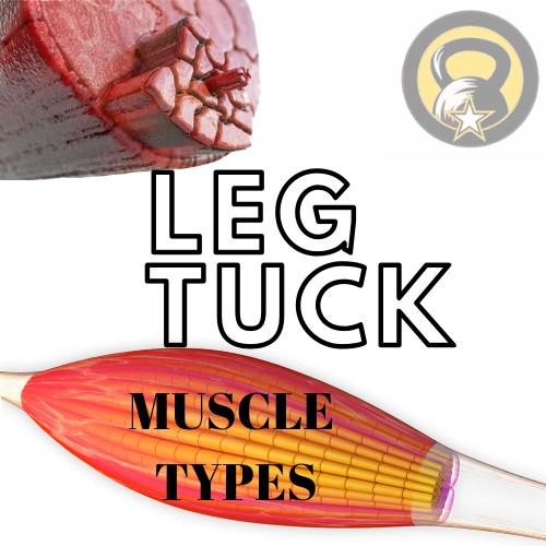 Army Leg Tuck Muscle Fiber
